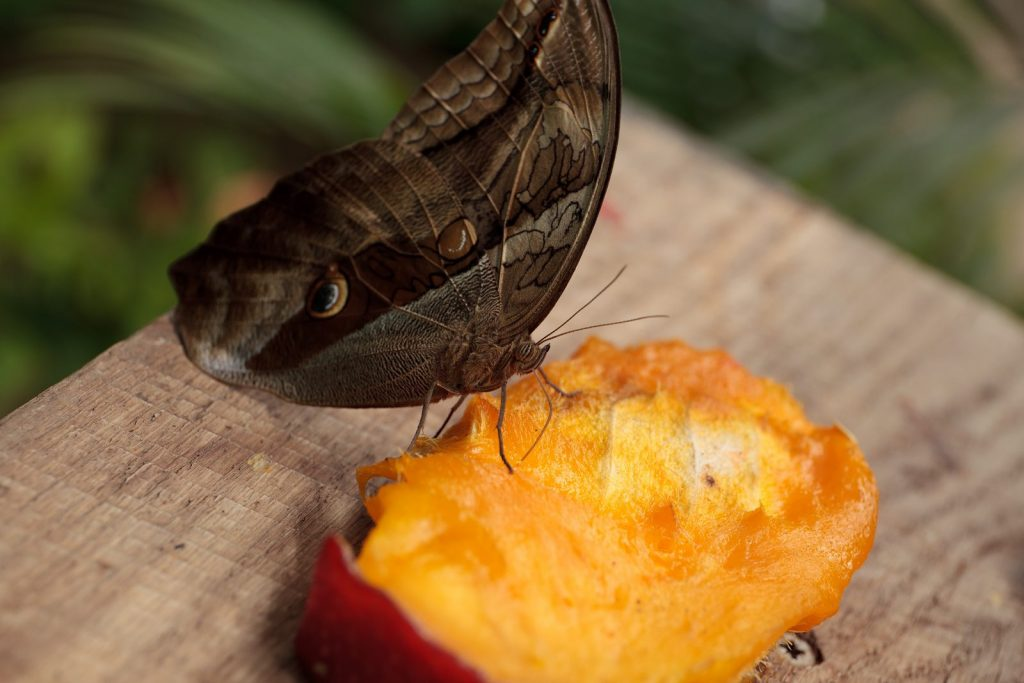 Parque de mariposas en Castell d'Empurias