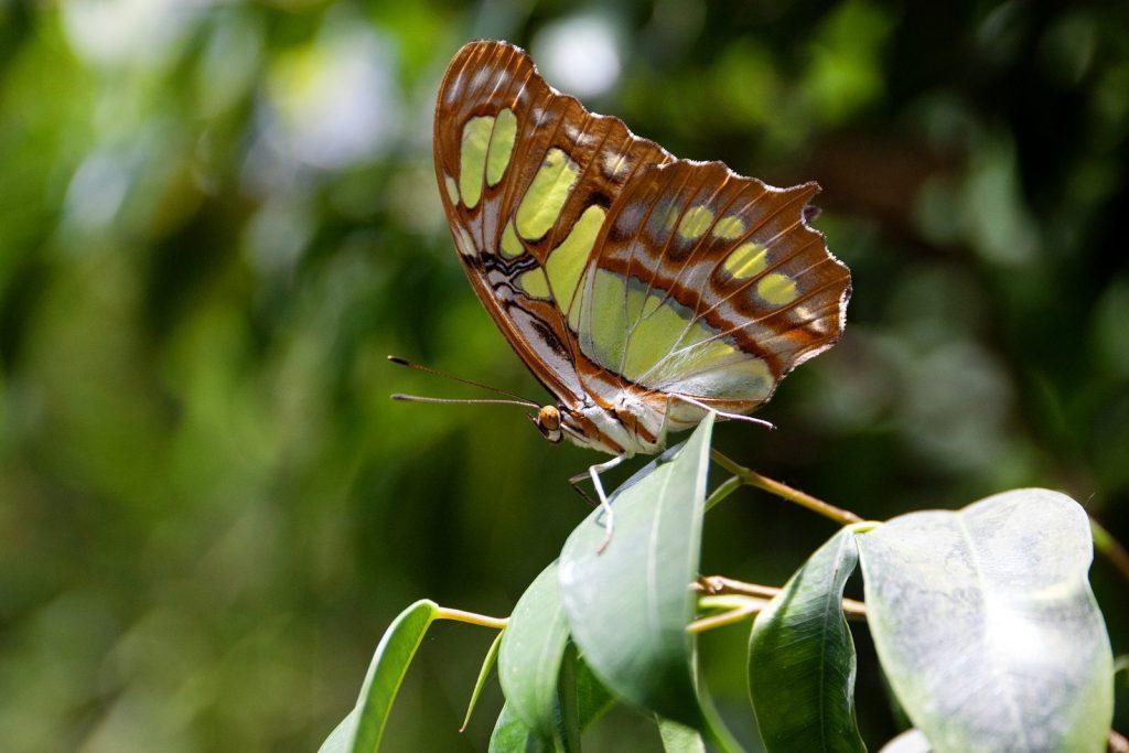 Parc de papallones a Castell d'Empúries