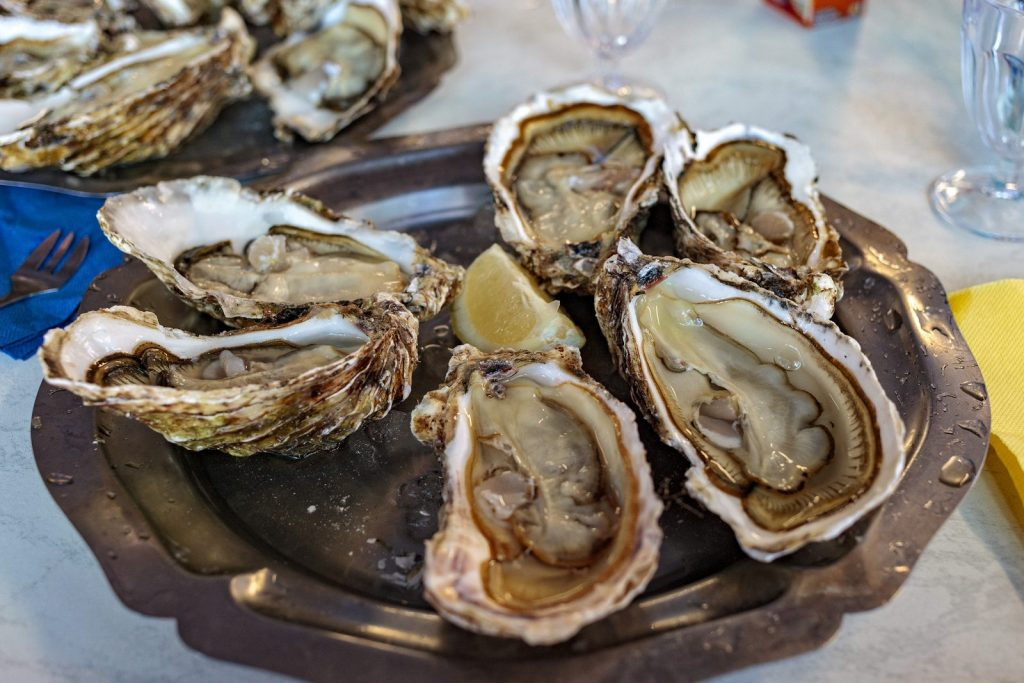 A delicious trip to oyster farms