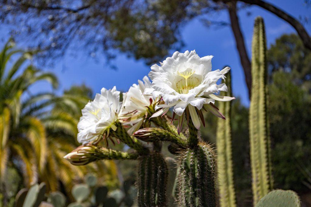 Park of cacti Pinya de Rosa