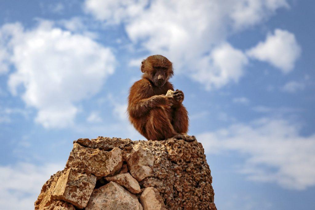 Safari Zoo in Mallorca