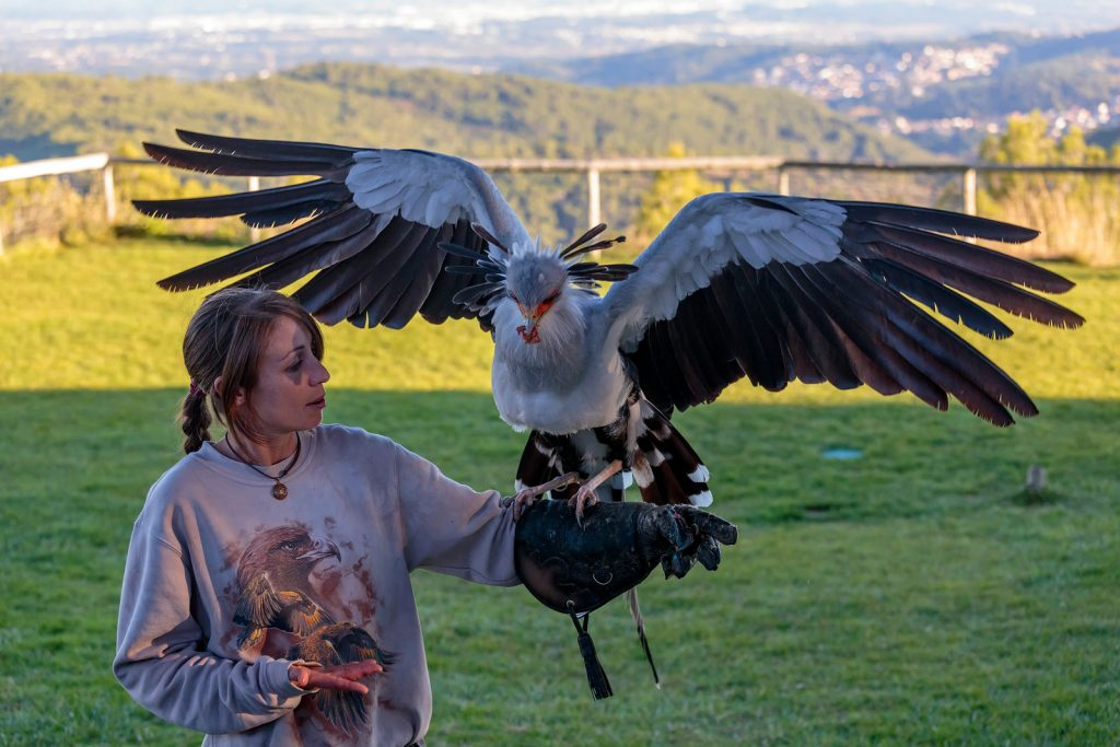 Birds of prey park Cim d'Àligues