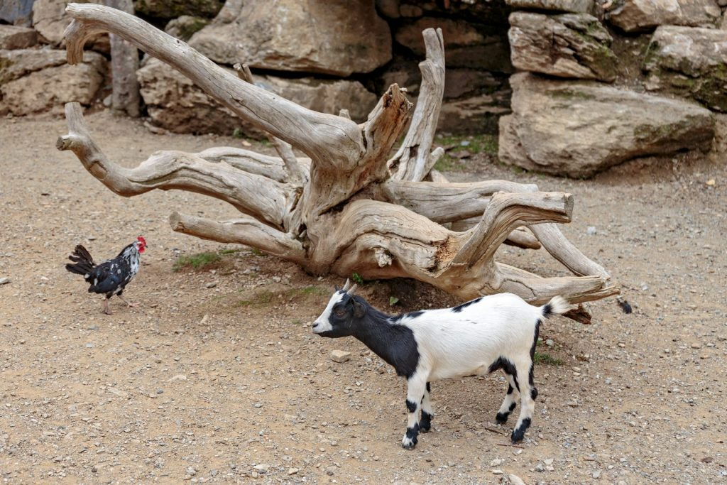 Walk through the park with animals in the Pyrenees - Molló Parc.