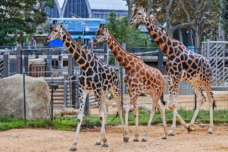 Зоопарк Барселоны Barcelona Zoo de Barcelone