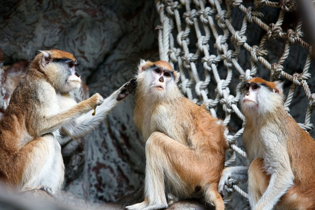 Зоопарк Барселоны Barcelona Zoo de Barcelone Мартышки-гусары